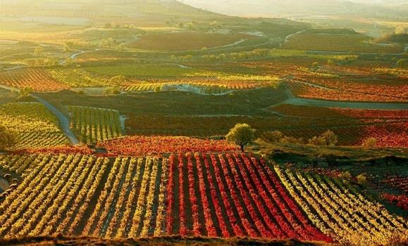 El hábitat del Rioja