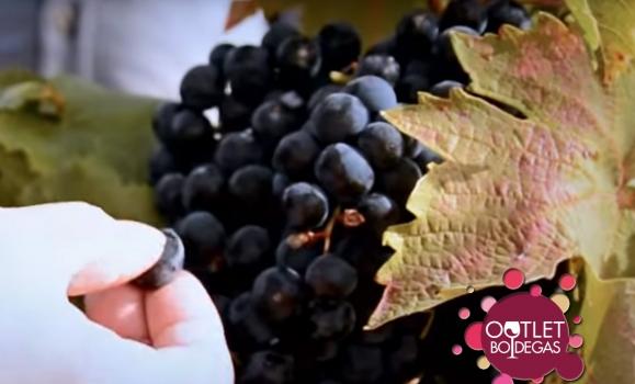 Más facturación de las Comunidades Autónomas por exportación vitivinícola, a pesar de que solo cuatro venden más cantidad