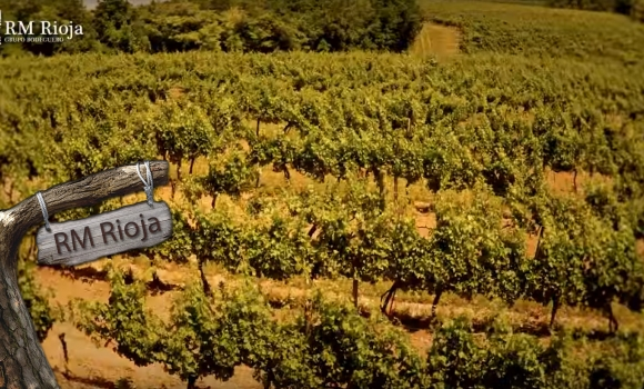 Este año 25% menos de cosecha, aún así RM Rioja te baja los precios del vino.