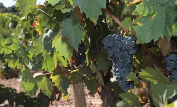 Rioja espera aumentar al 4 por ciento las ventas de vino 'on line'