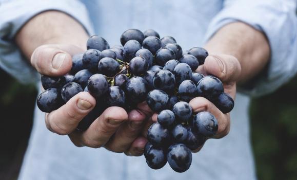 Ya estamos en la vendimia 2020 en La Rioja
