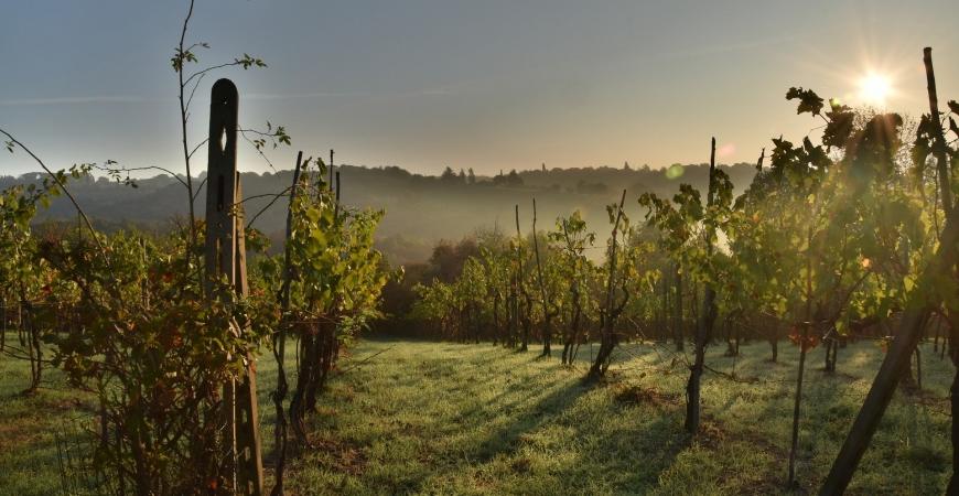 Francia rinde homenaje a la gran calidad de los vinos españoles